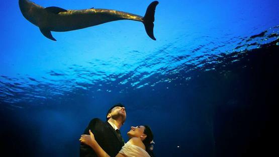 Matrimonio a acquario di genova costa edutainment spa for Blu di metilene acquario